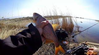 Рыба рыбалка на ладожском озере с берега