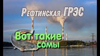 Отчет о рыбалке на рефтинском водохранилище зима 2020