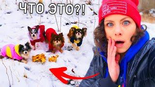 Собаки снова нашли в лесу это! Гуляю с собаками, Миша потерялась и мы её нашли, когда она ела ВЛОГ