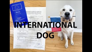 International Dog Travel Rules [How to bring your dog to Europe!]