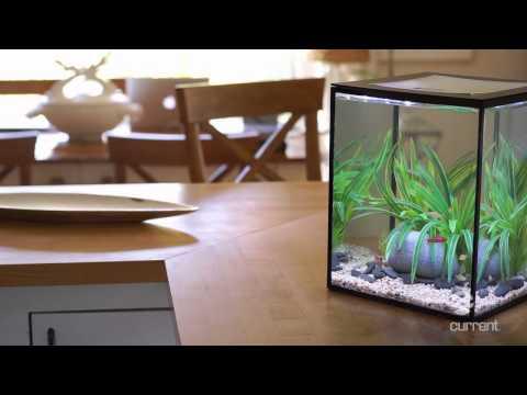 Solo Desktop Aquarium with Remote Controlled LED Lighting