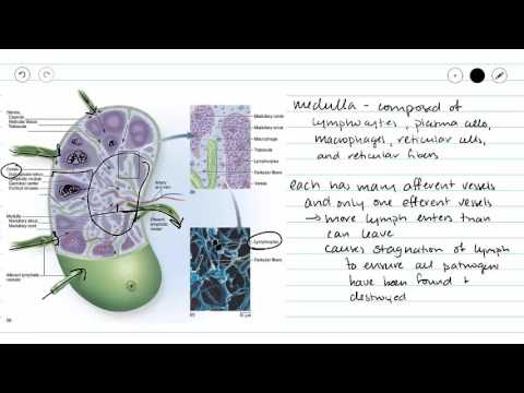 Parasite halamang-singaw sa Birch 4 na titik