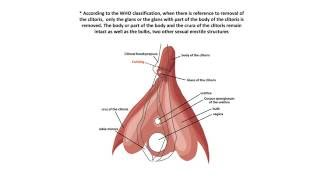 Female Genital Mutilation: A Visual Reference and Learning Tool for Health Care Professionals