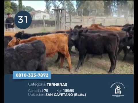 Lote Hembras - San Cayetano