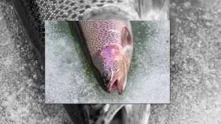 Завидное загородный клуб рыбалка zavidnoe club com