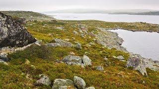 На что клюет арктический голец