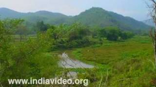 Greenery: the pride of Assam