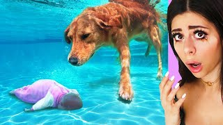 Unbelievable Animals That Saved Peoples Lives !