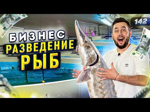 , title : 'Выращивание рыбы. Бизнес на селе. Осетровая ферма УЗВ