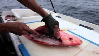 How to fillet fish [VIDEO]