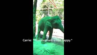 Elephant Abuse in Thailand