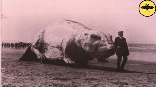 5 Unknown Beasts Caught on Camera.