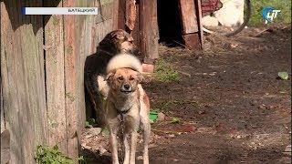 У жительницы Батецкого живет 50 домашних животных, соседи бьют тревогу