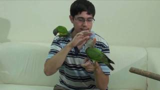 Taming Parrot By Touching & Scratching Beak