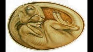Кажется, что поверить в это невозможно. Кочегар раскопал живого динозавра. Насколько это реально?