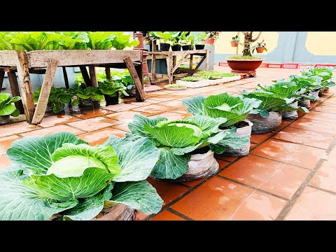 , title : 'Grow cabbage from seeds