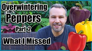 Overwintering Pepper Plants Part 2 - What I Missed