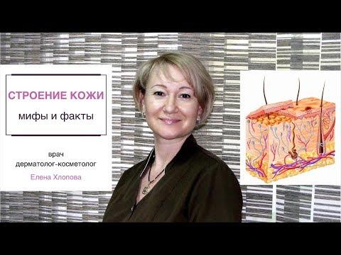 Строение кожи, мифы и факты. Косметолог Елена Хлопова.