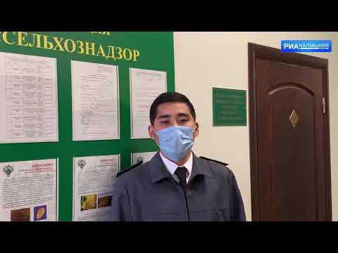 Собственники семян не известили Управление Россельхознадзора о ввозе на территорию Республики Калмыкия продукции высокого фитосанитарного риска