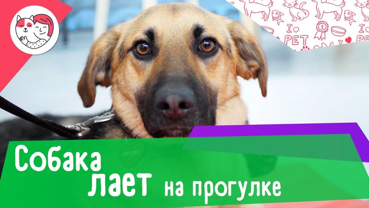 5 способов отучить собаку лаять на прогулке