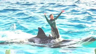 ◆鴨川シーワールド シャチパフォーマンス(2017.12.23)15:00~ ◆