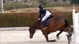 Клип конный спорт (Стань)