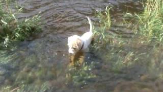 preview picture of video 'Ebi - psí potápěč z Vraného nad Vltavou'