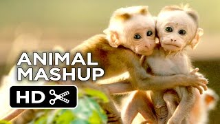 Monkeying Around - Ultimate Animal Movie Mashup (2015) HD