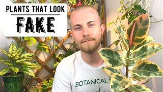 Houseplants That Look So Good... They Look Fake
