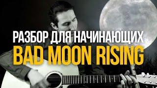 Bad Moon Rising простой разбор для начинающих - Уроки игры на гитаре Первый Лад