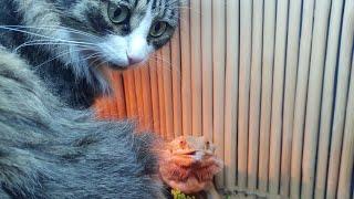 То чувство, когда лучший друг по шашлычкам внезапно стал веганом. Кот Мурлок и ящерица Блинчик