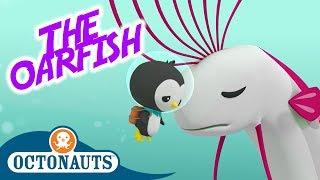 Octonauts - The Oarfish | Full Episode | Cartoons for Kids