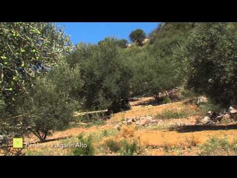 Der Große Wanderweg Málagas. Etappe 9: Periana – Alfarnatejo (Pulgarín Alto) (Deutsch)