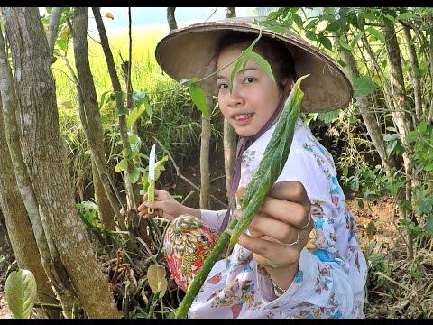 สาวหล่ายกังพาเก็บผักหนามริมคันนาข้าว Kengtung cute girl veggettables