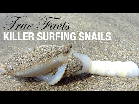 True Facts: The Killer Surfing Snails