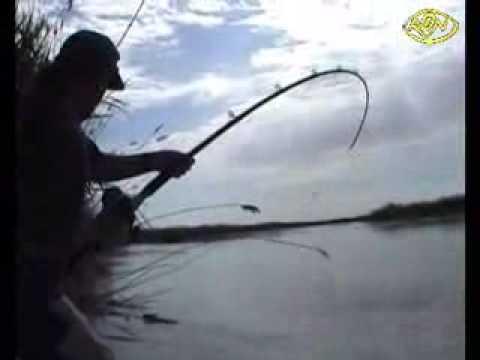 Siluros y su pesca en Caspe Mar de Aragon