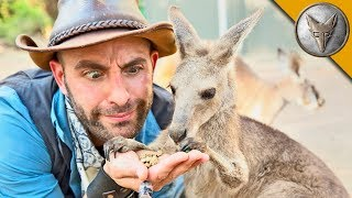 Kangaroo Feeding Time!