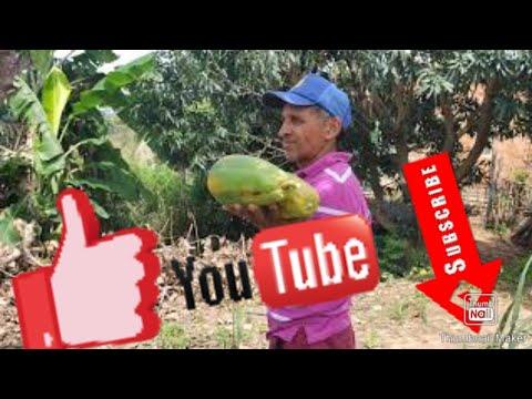 Agricultura Familiar - Damio de Capuxu...