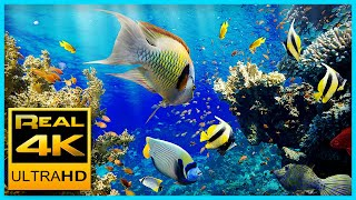The Best 4K Aquarium for Relaxation II 🐠 Sleep Relax Meditation Music - 2 hours 4K UHD Screensaver