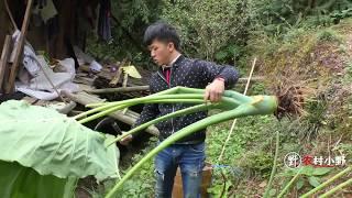 这个生长一米高的食材贵州叫广菜,很多地方都没有!