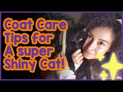 How to Look After Your Cats Coat! Tips on Look After Your Cats Fur and Getting a Shiny Coat!