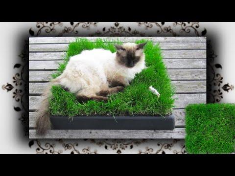 DIY 😻 Chill Out Zone aus Gras für Katzen | Cat grass place