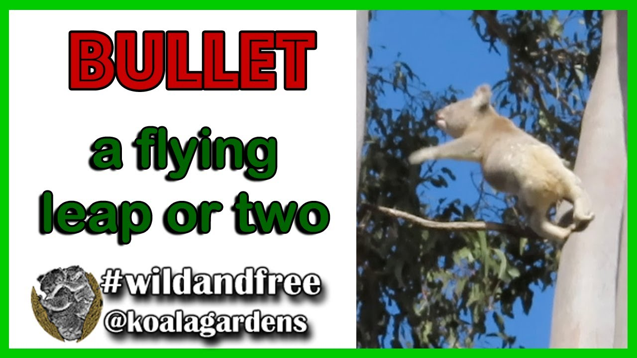 Bullet – a flying leap or two