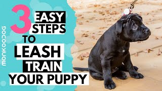 How to leash train your puppy or dog. || Monkoodog