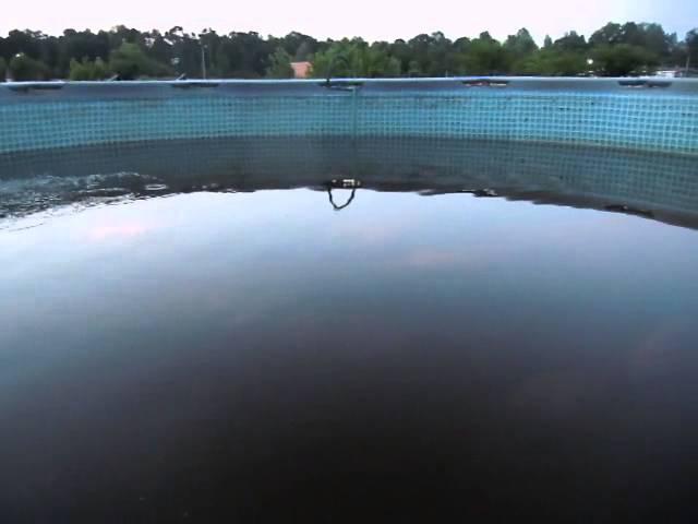 update on fish and backyard pool tank