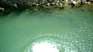 preview picture of video 'Cañas, Costa Rica clavado hacia atras Pato'