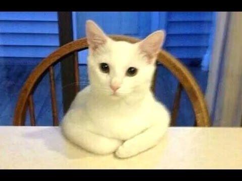 Tiernos Gatos Actuando Como Humanos