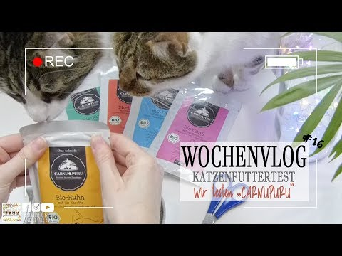 Wochenvlog | Futtertest: Carnupuru Bio Katzenfutter | Brother B's and little Eva
