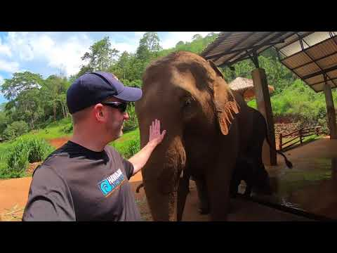 Patara Elephant Farm - Owner for a Day Experience