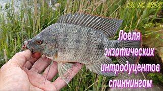 Нототения что за рыба где ловят